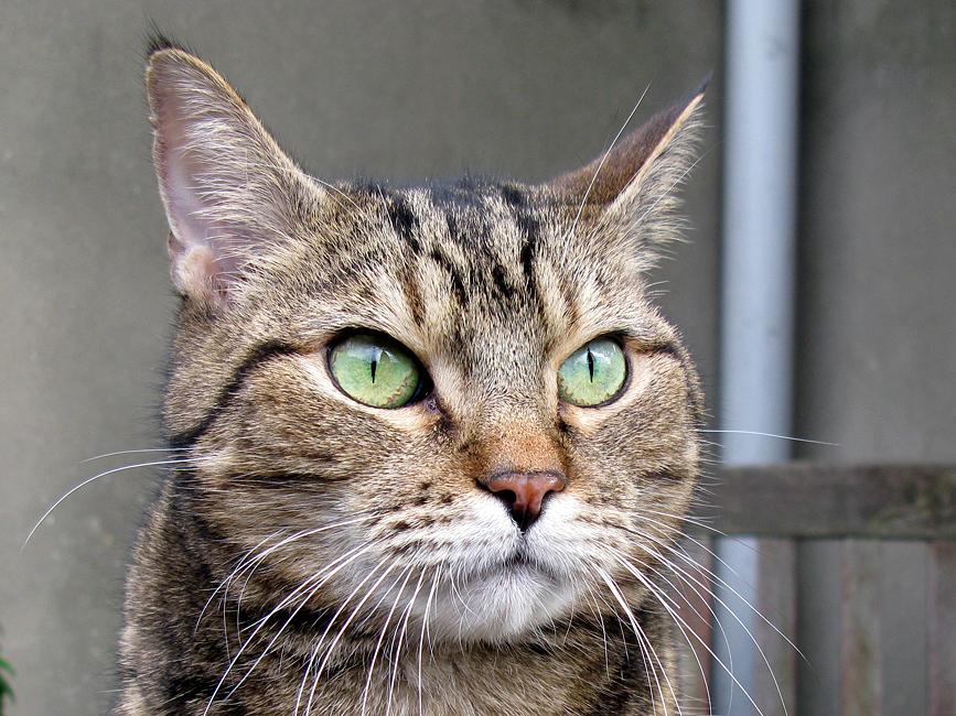 2016-yili-komik-kediler-patiliyo-3