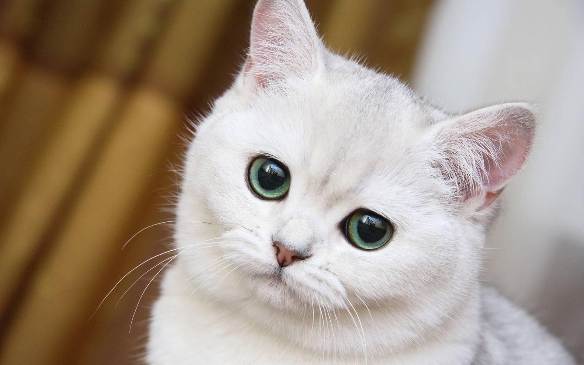 2016-yili-komik-kediler-patiliyo-6