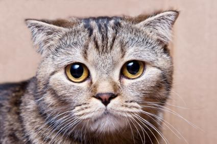 2016-yili-komik-kediler-patiliyo-7