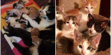 Ağlayan Yavru Kedileri Duyup Üzüldükten Sonra Onları Evlat Edinen Anne Kedi