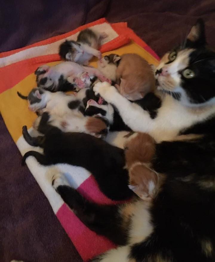 anne kedi terk edilmiş bebekler