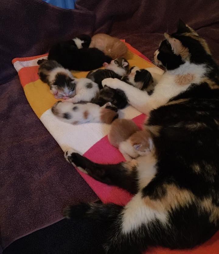 anne-kedi-terk-edilmis-bebekler-patiliyo-2