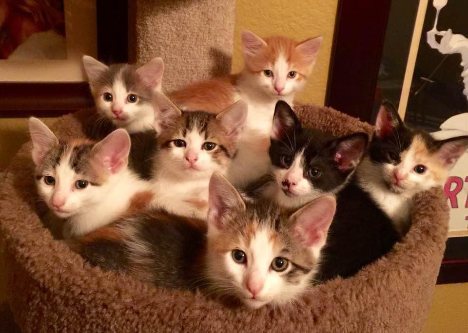 anne-kedi-terk-edilmis-bebekler-patiliyo-5