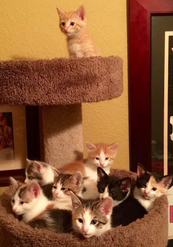 anne-kedi-terk-edilmis-bebekler-patiliyo-6