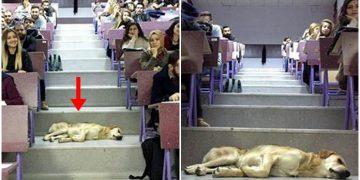 Bu Soğukta Üşüyen Köpeği Dersine Alıp Onunla Birlikte Dersi İşleyen Üniversite Hocası
