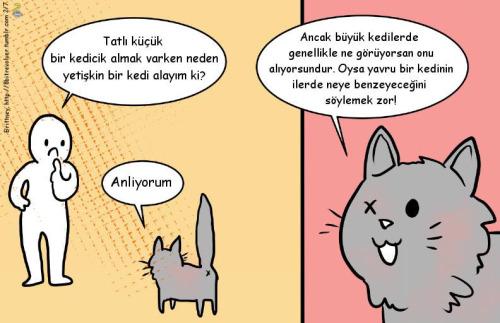 engelli-yasli-kedi-sahiplenme-patiliyo-2