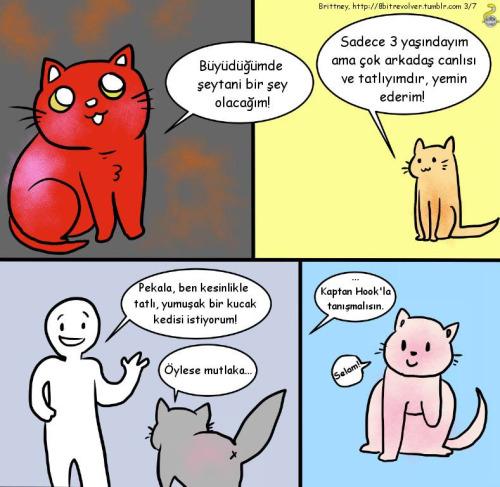 engelli yasli kedi sahiplenme