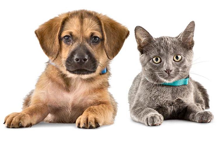 evdekileri-kedi-veya-kopek-sahiplenmeye-ikna-etmek-1