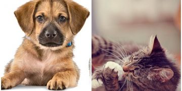 Evdekileri Kedi Veya Köpek Sahiplenmeye İkna Etmek İçin Atmanız Gereken 11 Sağlam Adım
