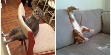 Ne Yaptıklarını Nobelli Bilim Adamlarının Bile Çözemeyeceği 16 Şapşal Kedi