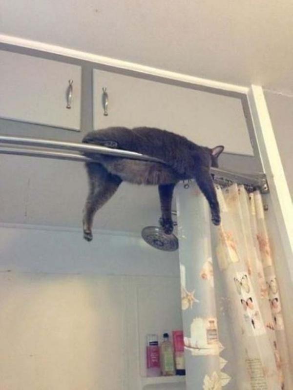 ilginc-kedi-resimleri-patiliyo-10