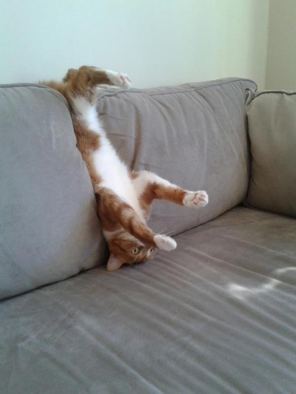 ilginc-kedi-resimleri-patiliyo-11