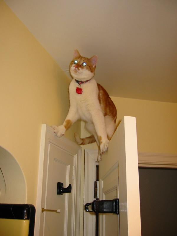ilginc-kedi-resimleri-patiliyo-12