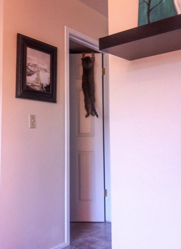 ilginc-kedi-resimleri-patiliyo-15