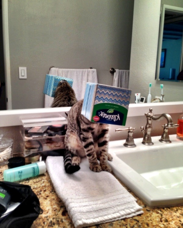 ilginc-kedi-resimleri-patiliyo-2