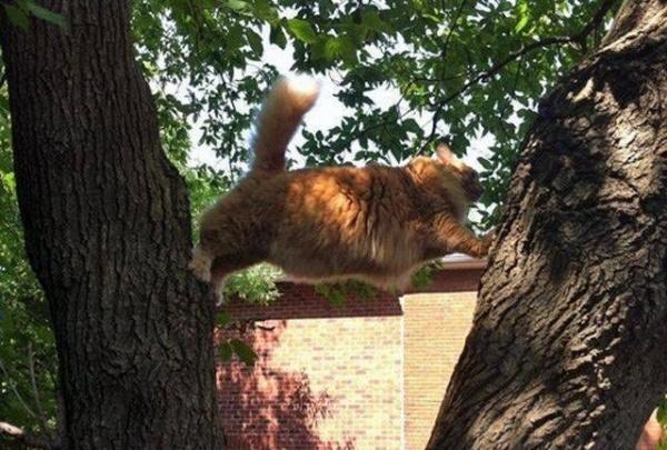 ilginc-kedi-resimleri-patiliyo-8