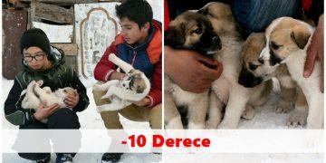 Yeni Doğum Yapan Köpeğin Yavrularını Harçlıklarıyla Besleyen Karslı Çocuklar