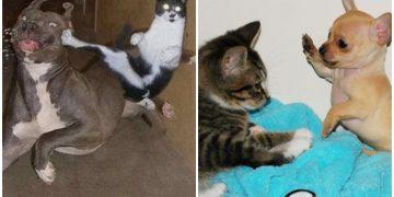 Öğrenelim: Kedi Köpek Kavgasını Ayırmak İçin En Etkili 4 Yöntem
