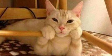 Kediler Hakkında Mutlaka Öğrenmeniz Gereken 14 Pratik Bilgi