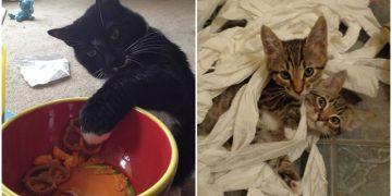 Aslında Kedinizin Size Sahip Olduğunun 14 Sağlam Kanıtı