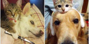 Köpeklerin Mars'tan Kedilerin Venüs'ten Olduğunu Kanıtlayan 11 Eğlenceli Durum