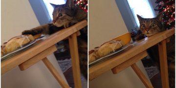 Sofradan Tarçınlı Çörek Aşırmadan 2 Saniye Önce Kameralara Yakalanan Haylaz Kedi