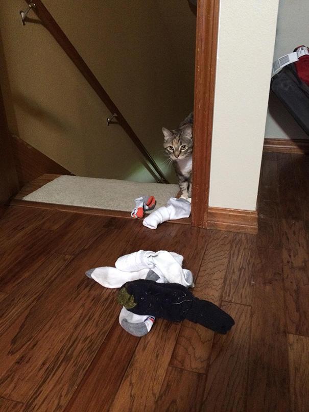 çorap hırsızı köpek
