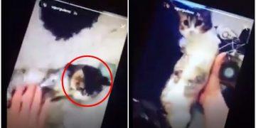 Yavru Kediyi Yapışkan Bantla Sararak Ona İşkence Yapan Cani Çocuk