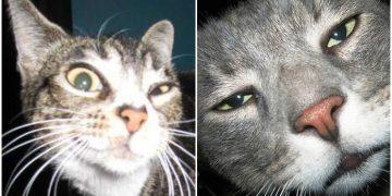 Kedi Alerjisi Nasıl Geçer Kedi Alerjisi Belirtileri