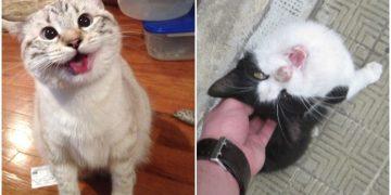 Kedi Sahibi İnsanların Hayatlarının Gerçekten Daha Mutlu Olduğunu Kanıtlayan 12 Neden