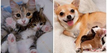 Anneliğin Tadını Doyasıya Çıkaran 16 Öpülesice Sevimli Hayvan