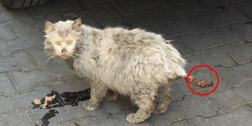 Adana'da Tedavisi İçin Günlerdir Yakalanmaya Çalışılan Hasta Sokak Kedisi