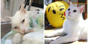 Kürekle Canice Dövülüp Gözlerini ve Bir Bacağını Kaybeden Kedi Muro