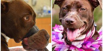 Havlıyor Diye Köpeğinin Ağzını Bantlayıp 5 Yıl Hapis Cezası Alan Cani Adam