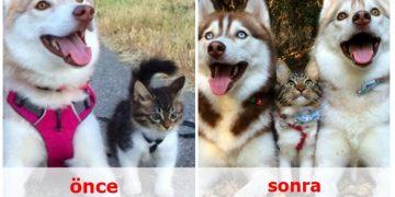 Öncesi ve Sonrası 15 Aşk Dolu Fotoğrafla Birlikte Büyüyen Hayvanlar