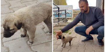 """Sivas'ta Barınağa Terk Edilen Ülkenin En Masum Köpeği """"Üç Ayaklı Garip"""""""