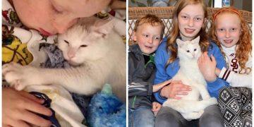 Doğumda Bebeklerini Kaybedip 3 Küçük Çocuğa Annelik Yapmaya Başlayan Güzel Kedi