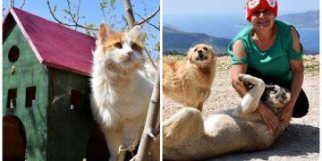 Emekli Olup Güneye Yerleştikten Sonra 167 Kedi ve 9 Köpeğe Bakan İyi Kalpli Kadın