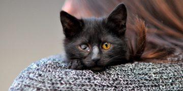 Artık Tek Gözleri Kalsa da Dünyanın En Güzel Gözlerine Sahip Yavruların Hikayesi