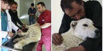 Pazar Arabasından Yürüteç Yapılan Köpeğe Veterinerlerden Sürprizli Haber