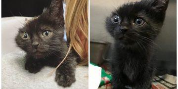Annesinden Dolayı Bir Kulağını Kaybeden Yavru Kedinin Mutlu Sonlu Hikayesi