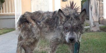 Görevlilerin Ağzını Bir Karış Açık Bırakan Sokak Köpeğinin Sürprizli Hikayesi