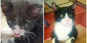 Dünyanın En Güzel Gözlü Kedisinin Sokaklardan Kurtarılma Hikayesi
