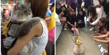 """Herkesin """"Bi Fotoğraf Çektirmek İçin """"Yarıştığı Dünyanın En Pofidik Kedisi"""