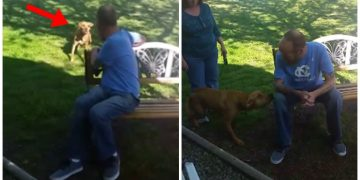 Hastanede 22 Kilo Veren Sahibini Tanıyamayan Köpekten Duyguları Şelale Yapacak Görüntüler