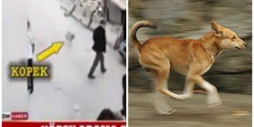 Yoldan Geçen Adama Son Hızla Çarpıp Onu Hastanelik Eden Sokak Köpeği