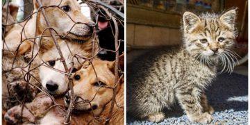 Darısı Çin'in Başına: Tayvan'da Kedi & Köpek Eti Yiyenlere Örnek Olması Gereken Cezalar
