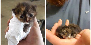 Tamirci Adamın Dükkanında Bulup Babalık Yaptığı Yeni Doğmuş Minnak Kedi