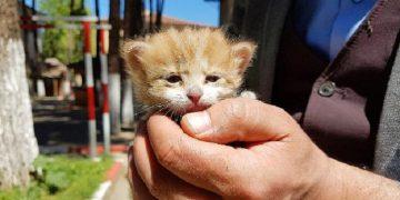 """İtfaiye Tarafından Ölümden Kurtarılıp """"110"""" Adı Verilen Minik Kedinin Hikayesi"""