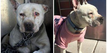 Yıllar Boyunca Zincire Vurulan Köpeğin Özgürlüğüne Kavuşma Anı
